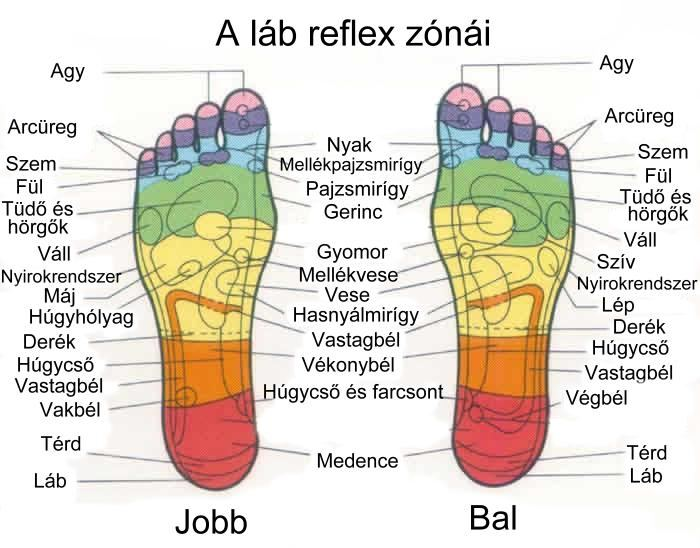 Terápia szalon - reflexológiás zónák